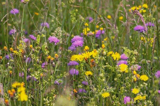 Jetzt mehrjährige Wildblumenflächen anlegen