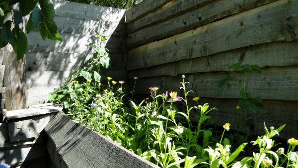 Pflanzentauschbörse in Marialinden